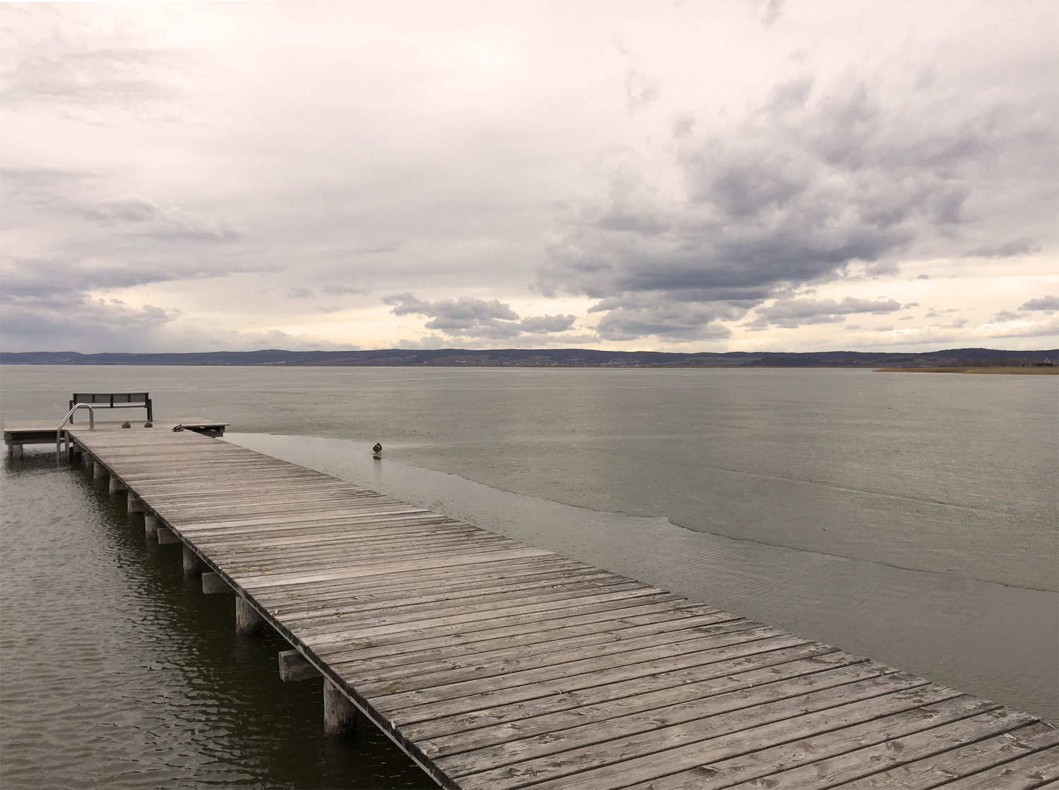 Lake Neusiedl, big grey clouds and a duck