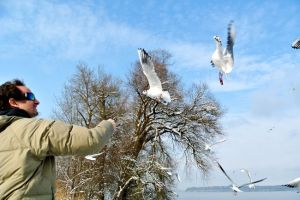 Seagulls at Lake Chiemsee.