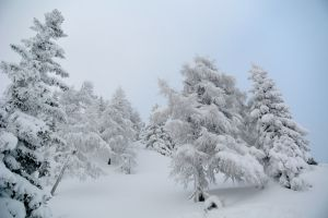 winter_wonderland02_web.jpg