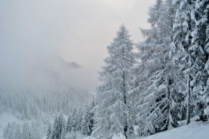 winter_wonderland03_web.jpg